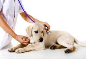Кастрация собак в клинике