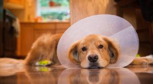 Уход за кастрированной собакой