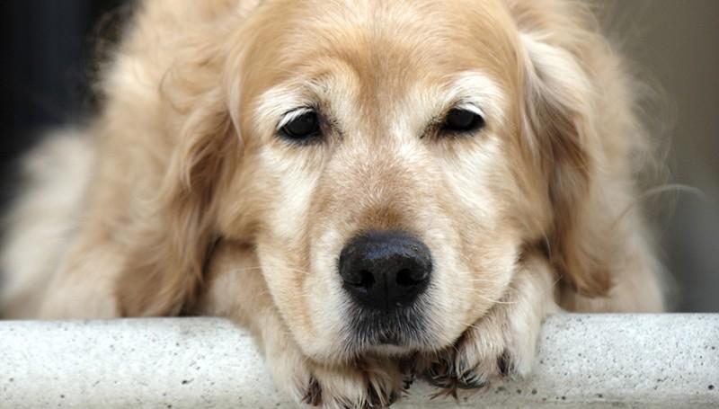Поведение собаки после кастрации