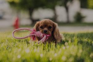 Обучение щенка командам