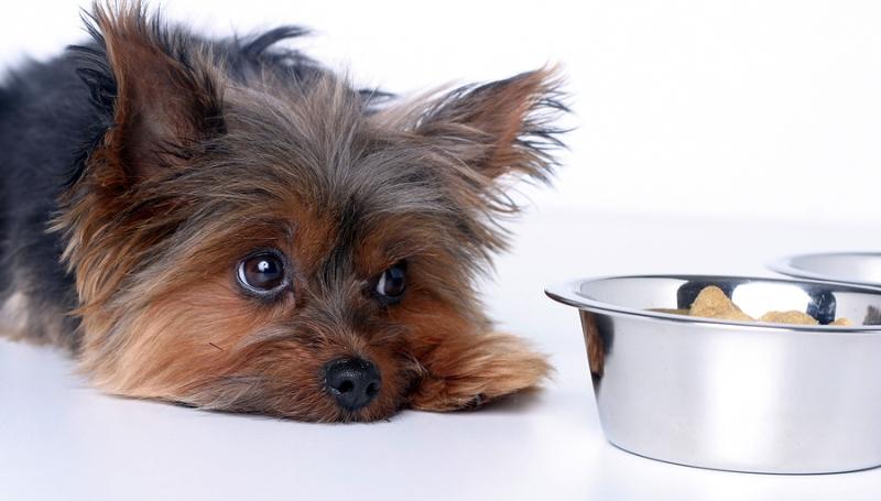 Понос и рвота у собаки как лечить
