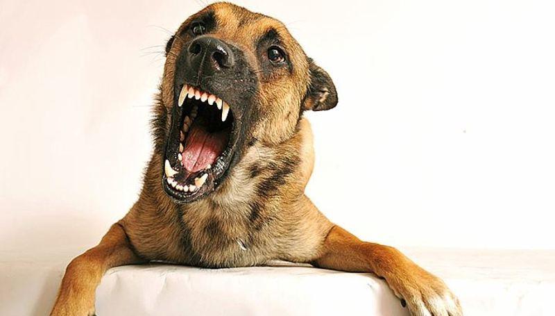 Зубы у собаки в два ряда – повод для обращения к ветеринару