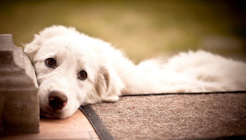 Симптомы и лечение мочекаменной болезни у собак
