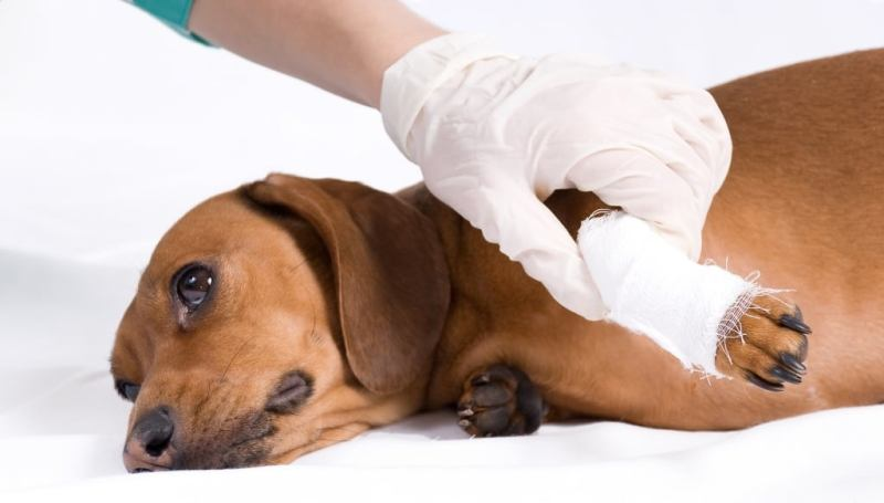 Растяжения связок у собаки
