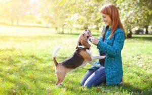 Взаимоотношения между собакой и человеком