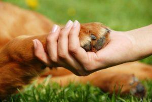 Проживание с собакой