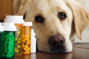 Витаминные комплексы для собак