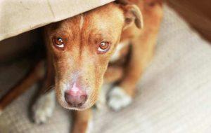 Стресс у щенка