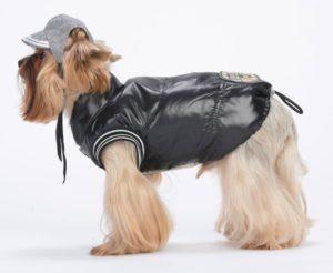 Ветровка для собаки