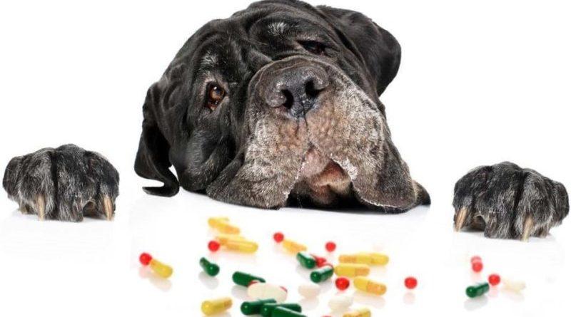 Витамины для собак от выпадения шерсти