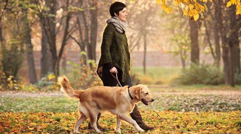 Выгул собак без намордника