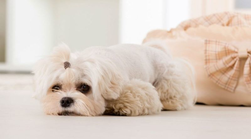 Болезни печени у собак
