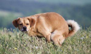 Признаки запора у собак