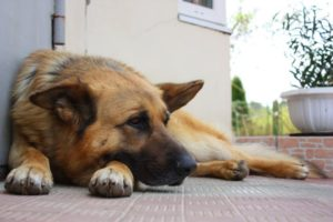Эндометрит у собаки симптомы