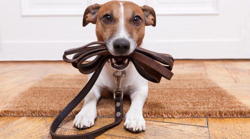 Как правильно одеть ошейник на собаку