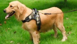 Особенности выбора шлейки для собак