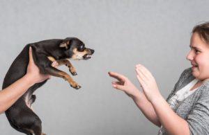 Проявление агрессии собаки к ребенку