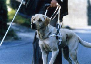 Слепой и собака поводырь