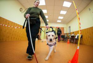 Обучение собаки поводыря