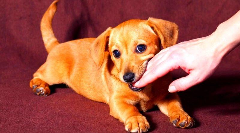 Что делать, если собака укусила человека