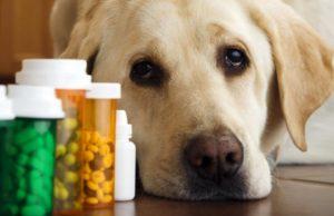 Антибиотики для собак
