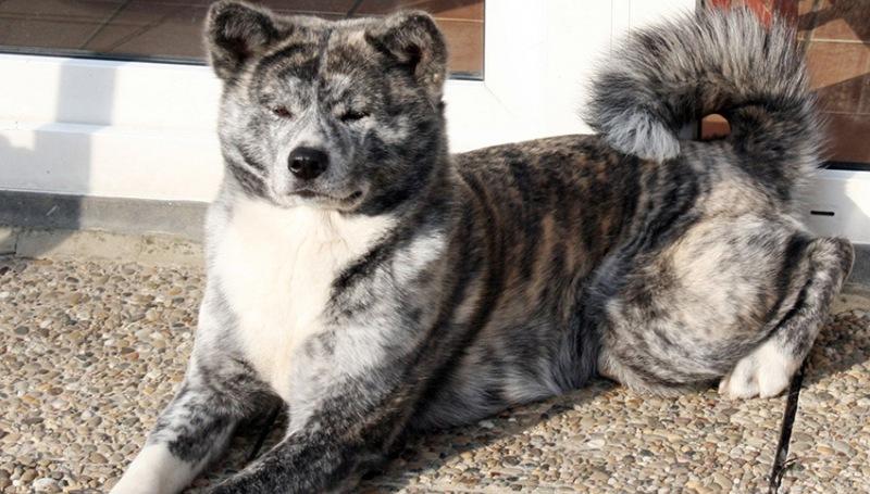 Выделения у собаки перед родами