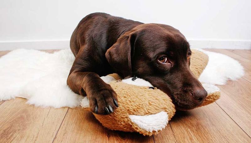 Воспаление матки у собак