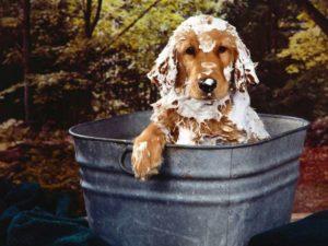 Шампунь для мытья собаки