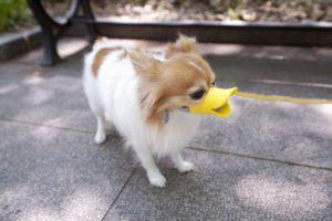 Намордник для миниатюрной собачки
