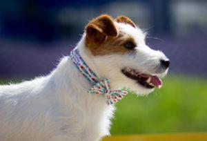 Ошейник бантик для собак