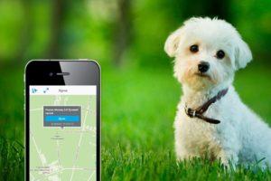 Местоположение собаки на карте навигатора