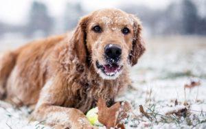 Переохлаждение собаки