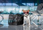 Правила перевозки собак за границу