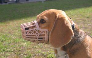 Пластиковый намордник для собак