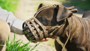 Намордник-сетка для собак