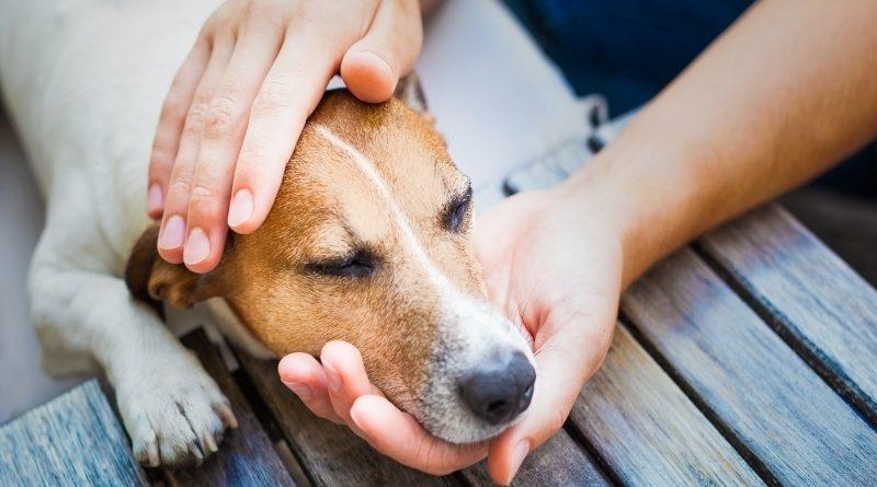 Стафилококк у собак