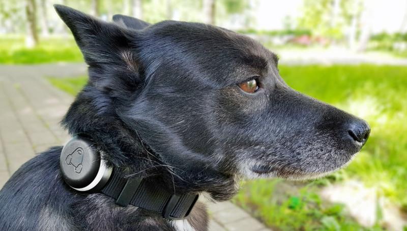 Умный ошейник для собак