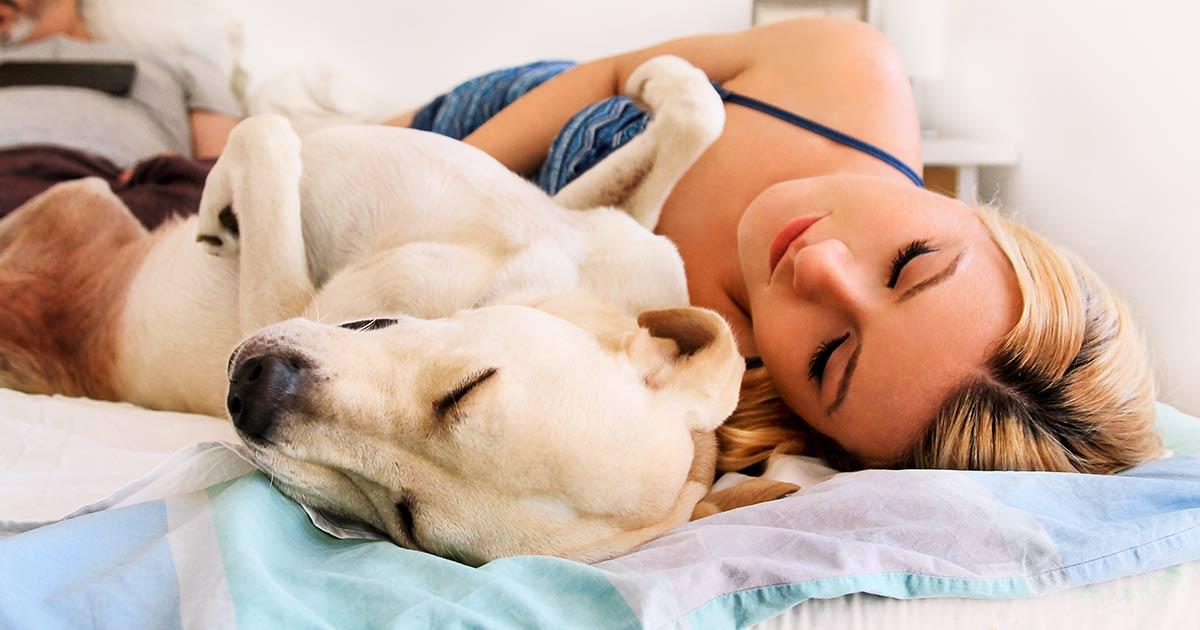 к чему снятся собаки женщине