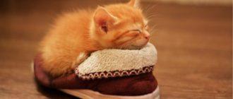 Как правильно подобрать спальное место для вашего домашнего питомца 1