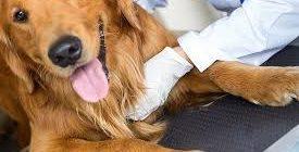 Услуги ветеринара 6