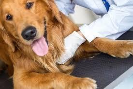 Услуги ветеринара 15