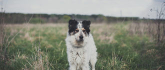 Pedigree – безграничная любовь к собакам 3