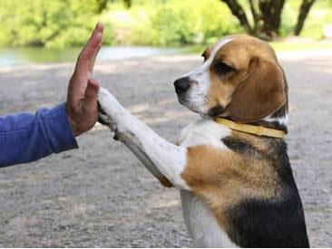 Воспитание собаки: особенности 3