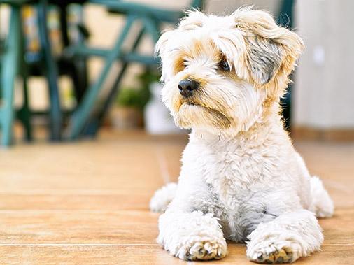 Выбор породы собаки: особенности 14