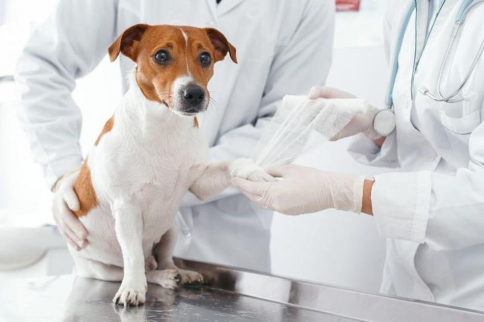 Ветеринарная клиника: как выбрать надежную организацию