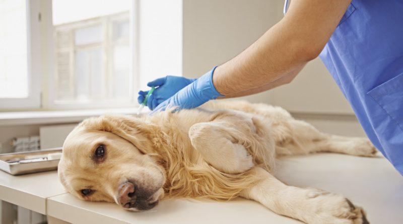 Особенности эвтаназии домашних животных 10