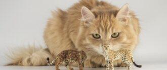 Уход за кошкой - основные правила 3