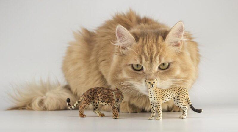 Уход за кошкой - основные правила 2