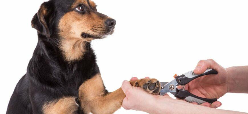 уход за когтями собаки
